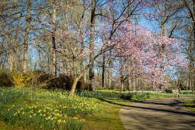 spring blooms at the memphis botanic garden