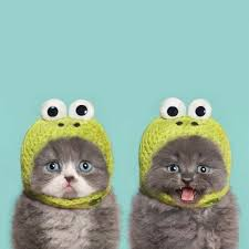 Image result for cute animals in clothes