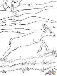 Small Picture Coloring Pages Animals Deer Coloring Pages Pictures Deer