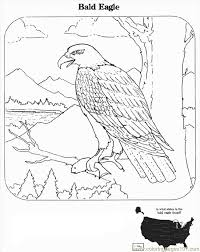 Small Picture Coloring Pages Realistic Bald Eagle Coloring Coloring Pages