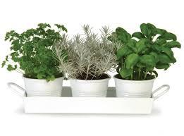 Kitchen Window Herb Garden Herb Pots Windowsill Inspiration Rodanluo