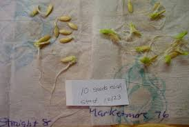 How To Germinate Flower Seeds Paper Towel Will My Seed Grow Germination Testing Marys Veggie Garden