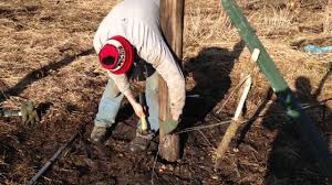 Barbed wire fence cattle Building How To Build Barbed Wire Fence In 10 Easy Steps farmcards Youtube
