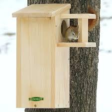 birdhouse predator guard diy squirrel house with