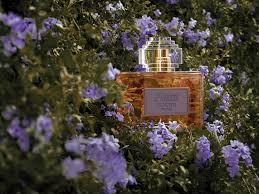 Новинка дня: аромат <b>Aura Loewe Floral</b>