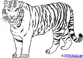 Small Picture Tiger In A Jungle Coloring Page Free Printable Pages akmame