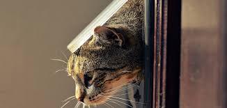 cat door in glass adelaide cat flap