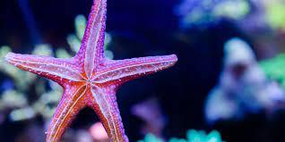 Everything You Need to Know About Starfish | Tynemouth Aquarium