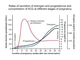 Morning Sickness Chart High Hcg Levels Related To Hg Babycenter