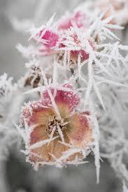 Pin by Roslyn MacKenzie on Sepia | Plants, Flowers, Dandelion