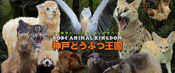 神戸 どうぶつ 王国