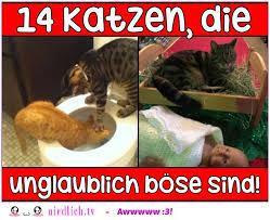 14 Katzen Die Unglaublich Böse Sind