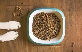 Consejos para mantener fresca la comida de tu mascota