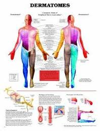 Chiropractic Body Chart 17 Best Chiropractic Charts Images Chiropractic Anatomy