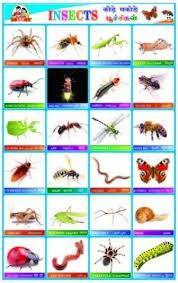 Educational Sticker Charts Fruits Sticker Charts