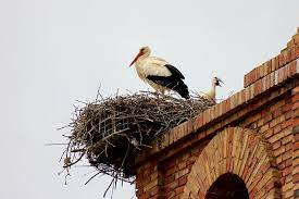The Pyrenees – Costa Blanca Bird Club