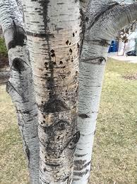 Img_1134_original. Hennepin County Minnesota tree health