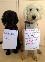 some dogs will do anything to get a oggo fetch machine good luck with the