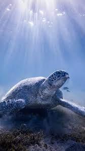 Turtle, underwater, sun rays 750x1334 ...