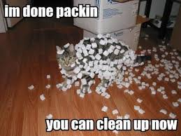 Image result for cats packing up to move