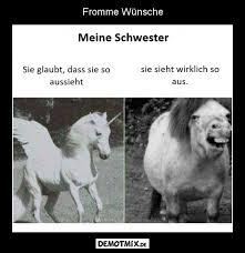 Pferd Demotmix Lustige Beste Witze Lustige Sprüche Lustige