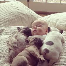 cute baby puppies sleeping.  Puppies Baby Sleeping With Puppies To Cute Baby Puppies Sleeping