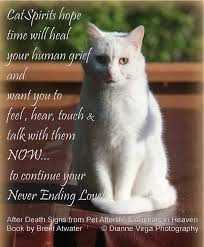 Loss Of A Cat Quotes Gorgeous Inspirational Quotes About Cats Cat Loss Quote Greiving Over Cat
