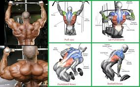 Back Exercises Gym Chart Thick And Wide Back Routine Building A Massive Back Gym
