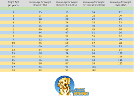 Dog To Human Years Conversion Chart Dog Age Chart How To Convert Dogs Age Into Human Years