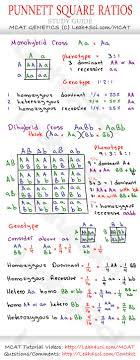 punnet square guide