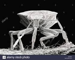 Scanning Electron Microscope Close Up Image Of A Beetle