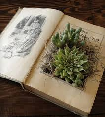 24 nestle your delicate succulents in an old book