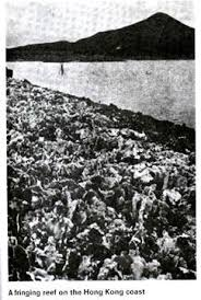 essay on coral reefs fringing reef on the hong kong coast