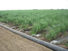 Surface Irrigation Wikipedia