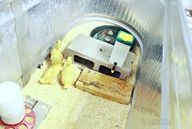 make your own diy duckling brooder