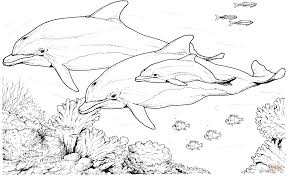 Free Online Dolphin Coloring Page 25 With Additional Pictures with ...