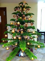 Christmasinhawaiipictures  Cynthia On The Move Christmas In Christmas Tree Hawaii