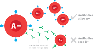 blood types and antigens