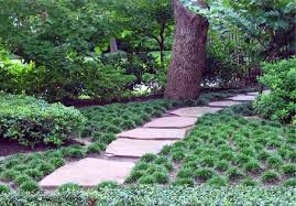 mondo grass groundcover for the yard