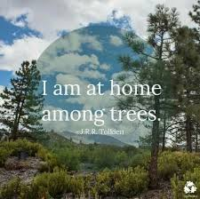 Forest Quotes Custom Me Too I Would Love To Live In A Rain Forest Or Redwood Forest