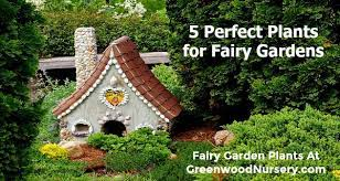 a fairy garden with these 5 plants