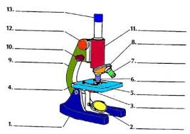Parts Of The Microscope Using The Microscope