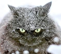Image result for cats in snow images