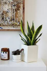 Great The Sill Planters And Potted Plants: The Ezra And The Olmsted, Available At  Thesill. Living Room PlantsPotted PlantsIndoor ...