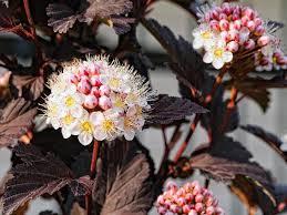 low maintenance shrubs for your garden