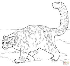Crouching Snow Leopard Coloring Page On Leopard Coloring Page