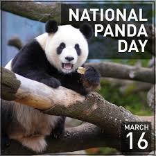 Image result for international panda day 2018 pix