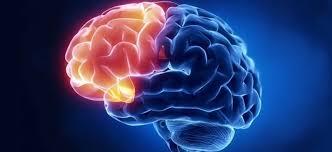 Image result for brain prefrontal cortex