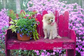 that s why an actual fence is the best way to go when trying to keep your dog out of your garden