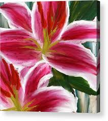 asiatic lily acrylic print featuring the painting asiatic lily asiatic lily paintings pink paintings